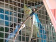 попугаи с домашней фермы в алматы